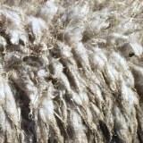 Was ist eigentlich (Schaf)Wolle?