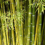Garne mit Bambus