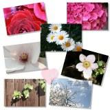 Postkarte mit wunderschönen Blumenmotiven