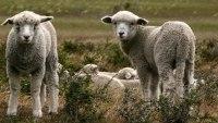 Rosy Green Wool feinste Merinowolle in Bioqualität